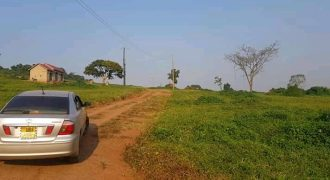 Plots for sale in Matugga Gombe at shs 23,000,000