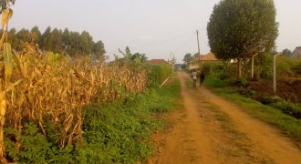 Plots for sale in Gayaza at shs 35,000,000