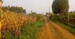 Plots for sale in Kira-Nsasa at shs 45,000,000