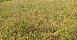 Plots for sale in Kikyusa at shs 5,000,000