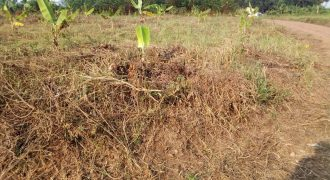 Plots for sale in Gayaza Kiwenda at shs 15,000,000
