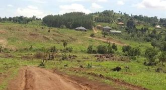 Plots for sale in Wakiso Mabobwe at shs 25,000,000