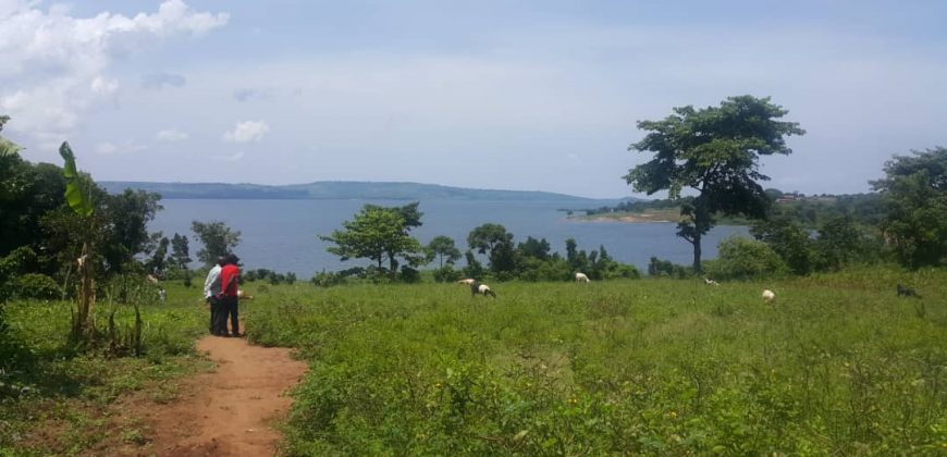 Plots for sale in Bugoba at shs 20,000,000