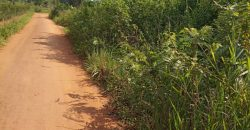 Plots for sale in Nkongolo Kamwenge at shs 4,000,000