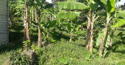 Plots for sale in Buziga at shs 600,000,000