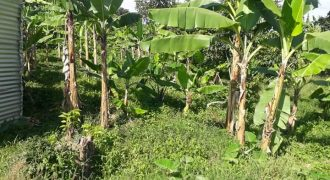 Land for sale in Lukiizi Luwero at shs 3,500,000