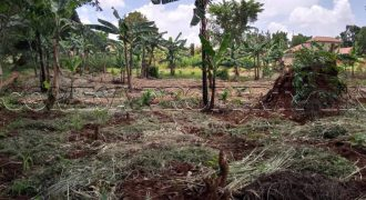 Land for sale in Nalongo Luwero at shs 3,500,000