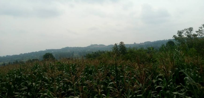 Plots for sale in Bugiri at shs 350,000,000