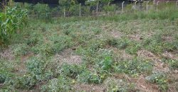 Plots for sale in Mukono Wantoni at shs 50,000,000