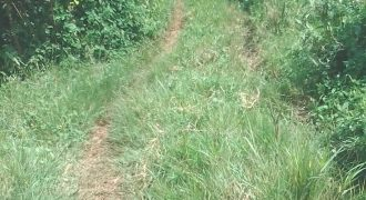Plots for sale in Bubwa Bukunja at shs 12,000,000
