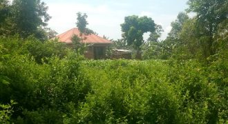 Plots for sale in Bunyoror Kibaale DIstrict at shs 1,200,000