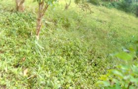 Plots for sale in Gayaza at shs 30,000,000
