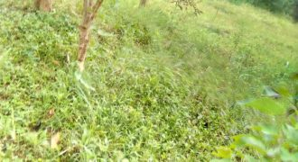 Plots for sale in Garuga at shs 300,000,000