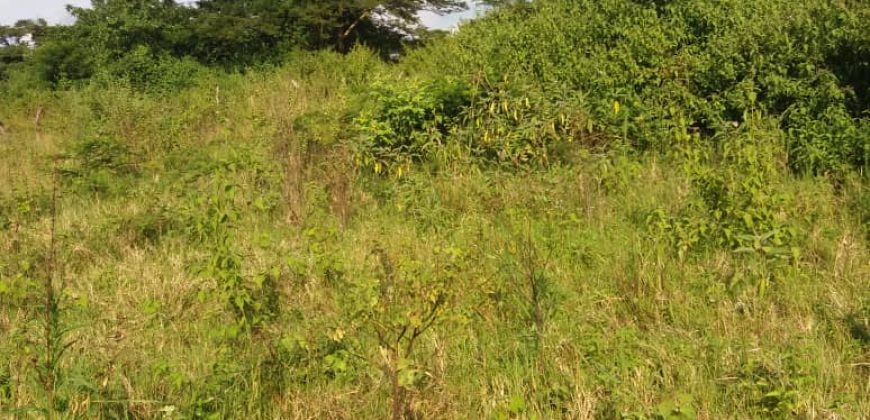 Land for sale in Ndimulungi Luweero at shs 4,500,000