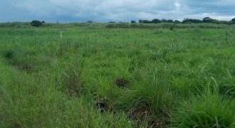 Plots for sale in Mukono Nabuti at shs 46,000,000