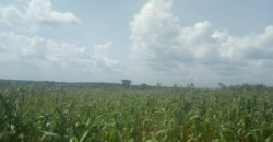 Plots for sale in Nalugala at shs 250,000,000