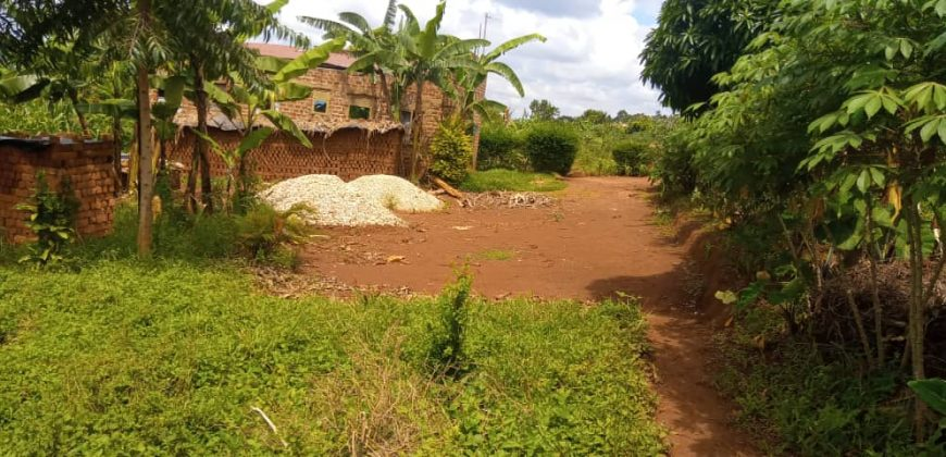 Plots for sale in Kira at 50,000,000