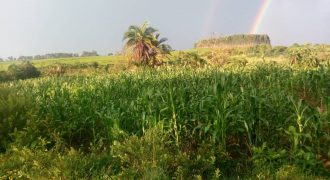 Plots for sale in Mitiyana Nakaseta at shs 6,000,000