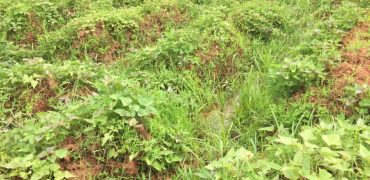 Plots for sale in Nyakisharara Kashaka at shs 25,000,000