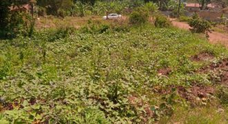 Farmland for sale in Kigugu Katikamu Wobulenzi at shs 13,000,000