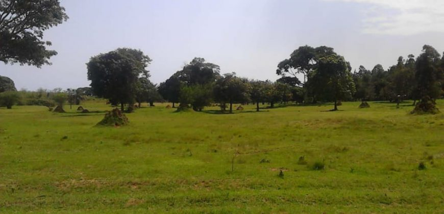 Plots for sale in Bwebajja Entebbe road at shs 250,000,000