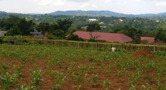 Plots for sale in Gayaza Bugema at shs 15,000,000