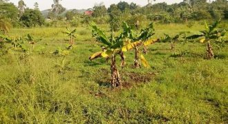 Plots for sale in Masaka at shs 2,000,000
