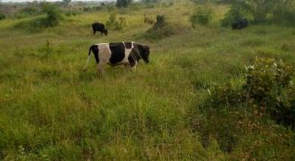 Plots for sale in Kasawo Mukono district at shs 5,000,000