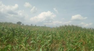 Plots for sale in Lugazi at shs 12,000,000