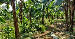 Plots for sale in Bugonga Entebbe at shs 300,000,000