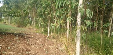 Plots for sale in Busunju town at shs 5,000,000