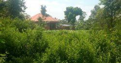 Plots for sale in Namataba at shs 15,000,000