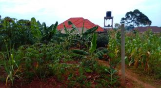Plots for sale in Mukono Seeta Budugala at shs 22,000,000