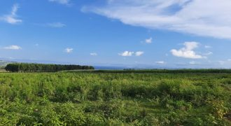 15.6 Acres Land For Sale In Jinja Wairaka
