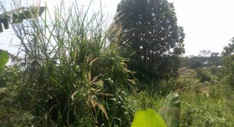 Plots for sale in Kyesiga Kyotera district at shs 1,500,000
