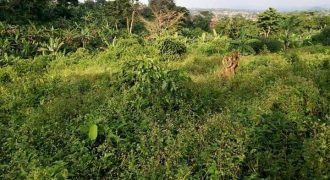 Plots for sale in Nnsube Nabuuti road Mukoto town at shs 35,000,000