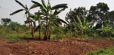 Plots for sale on Lubya hill at shs 600,000,000