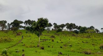 Plots for sale in Nyimu Kisigula Buikwe district at shs 15,000,000
