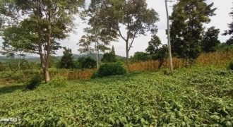 Plots for sale in Mukono Global at shs 50,000,000
