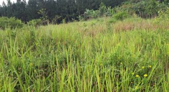 Plots for sale in Kiwenda at shs 17,000,000