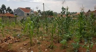 Plots for sale in Kyesiiga at shs 1,5000,000