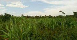 Plots for sale in Mbalala Mukono at shs 260,000,000