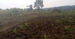 Plots for sale in Mukono Buduggala at shs 40,000,000