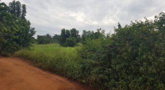 Plots for sale in Kyangwali at shs 3,500,000