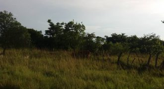 Plots for sale in Mukono hilton at shs 50,000,000