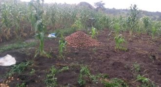 Plots for sale in Nakasongola at shs 1,000,000
