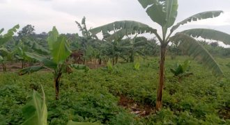 Plots for sale in Kapeeka at shs 4,500,000