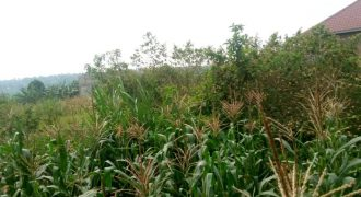 Plots for sale in Kyagwe at shs 3,000,000