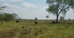 Plots for sale in Vumba at shs 46,000,000