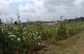 Plots for sale in Buddugala at shs 30,000,000